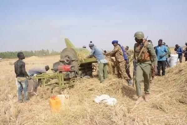 Opération Maliko-Théâtre Centre- Secteur 5 : Les FAMa à pied d'œuvres pour des récoltes sécurisées